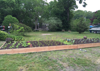 my very first garden